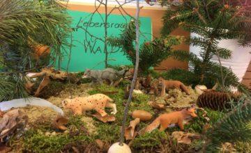 Die 4B hat zurzeit einen eigenen kleinen Wald in der Klasse.